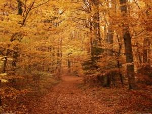Photo forêt en automne